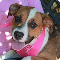 Adopt A Pet :: Maybelle - Garfield Heights, OH