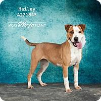 Adopt A Pet :: HAILEY - Conroe, TX