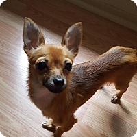 Adopt A Pet :: Marie - Grand Rapids, MI