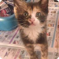 Adopt A Pet :: Esmerelder - Whitestone, NY