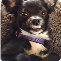 Adopt A Pet :: Lulu - Ardmore, OK