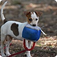 Adopt A Pet :: Raine - Groton, MA