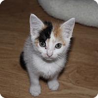 Adopt A Pet :: Lottie - Tampa, FL
