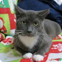 Adopt A Pet :: Larson - Marble Falls, TX