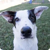 Adopt A Pet :: Michel Gerard - Jersey City, NJ