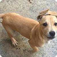 Adopt A Pet :: Roo - Charlotte, NC