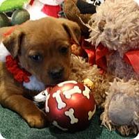 Adopt A Pet :: Petunia - Vacaville, CA