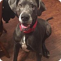 """Adopt A Pet :: Lord """"Ridge"""" - Gallatin, TN"""