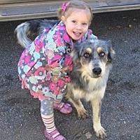 Adopt A Pet :: SIERRA 5 - Chandler, AZ