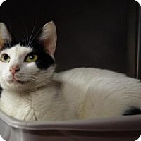 Adopt A Pet :: Zelma - New Milford, CT