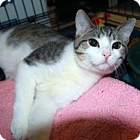 Adopt A Pet :: Teko - Rochester, MN
