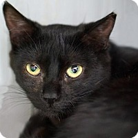 Adopt A Pet :: Charlotte - Alameda, CA