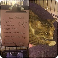 Adopt A Pet :: Spice - Chilhowie, VA