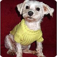 Adopt A Pet :: Rocky - Mooy, AL