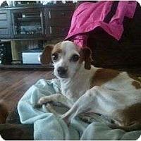 Adopt A Pet :: Peanut - Murfreesboro, TN