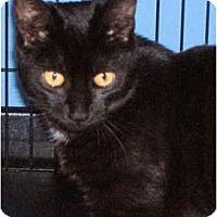 Adopt A Pet :: Monika - Colmar, PA