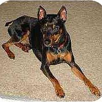 Adopt A Pet :: Emmitt - Florissant, MO
