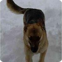 Adopt A Pet :: Coco - Hamilton, MT