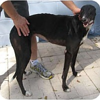 Adopt A Pet :: Macy - Canadensis, PA
