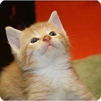 Adopt A Pet :: ZEUS - SILVER SPRING, MD