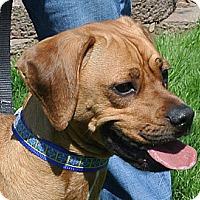 Adopt A Pet :: Maxx - East Sparta, OH