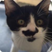 Adopt A Pet :: Oreo - Santa Monica, CA