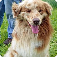 Adopt A Pet :: Leo - Elk River, MN