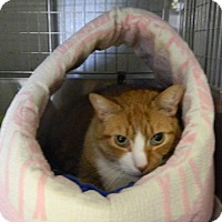 Adopt A Pet :: HUNTER - Cliffside Park, NJ
