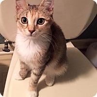 Adopt A Pet :: Ariel - East Brunswick, NJ