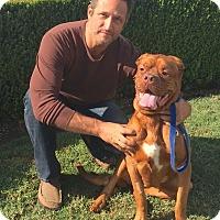 Adopt A Pet :: Tessa - Van Nuys, CA