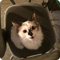 Adopt A Pet :: Ella - Morganton, NC