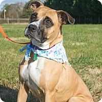 Adopt A Pet :: Laila $125 - Seneca, SC