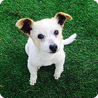 Adopt A Pet :: Sampson - Irvine, CA