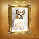 Adopt A Pet :: Tex