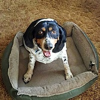 Adopt A Pet :: Missie - Columbus, OH