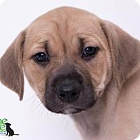 Adopt A Pet :: Linen - Savannah, GA