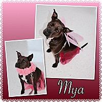 Adopt A Pet :: Mya - Pawsitive Direction - Loxahatchee, FL
