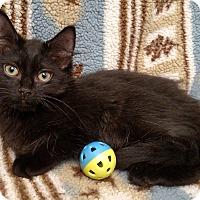 Adopt A Pet :: Calvin - Gainesville, VA