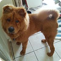 Adopt A Pet :: Choo Choo Chulo - Marina del Rey, CA