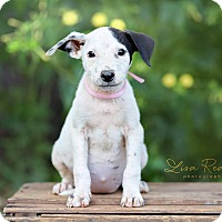 Adopt A Pet :: Baby in CT - Manchester, CT