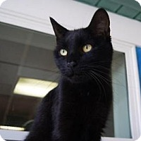 Adopt A Pet :: Momo - New Milford, CT