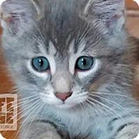 Adopt A Pet :: Muffin - Mendota, IL