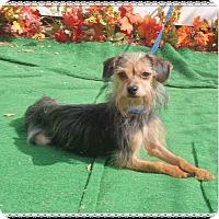 Adopt A Pet :: WIGGLES - Marietta, GA
