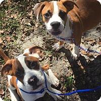 Adopt A Pet :: Frankenberry & Count Chocula - Rincon, GA