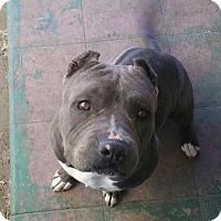 Adopt A Pet :: Tyson - Crestline, CA