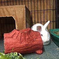 Adopt A Pet :: Baxter - Williston, FL