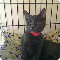 Adopt A Pet :: Tressa - Lunenburg, MA