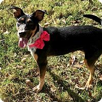 Blue Heeler Mix Dog for adoption in Calgary, Alberta - Libby