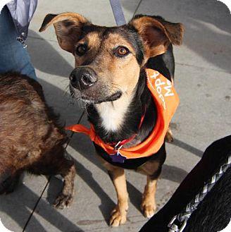 German Shepherd Dog Mix Dog for adoption in Littleton, Colorado - Tank