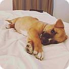 Adopt A Pet :: Dumplin